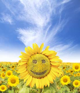 Fun Smiling Flower