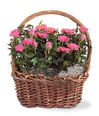 Basket of pink floral stems