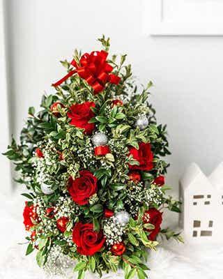 Christmas tree plant