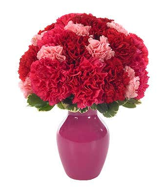 CSweet Carnations in a Bud Vase