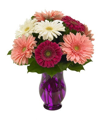 gerbera wishes at from you flowers