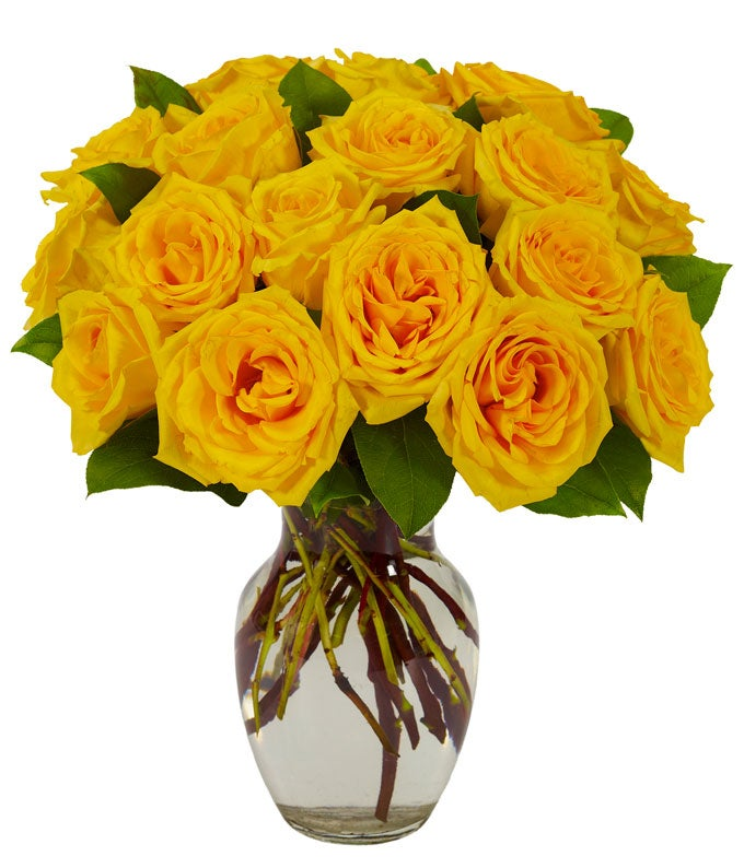 Long stemmed Yellow roses in a glass vase