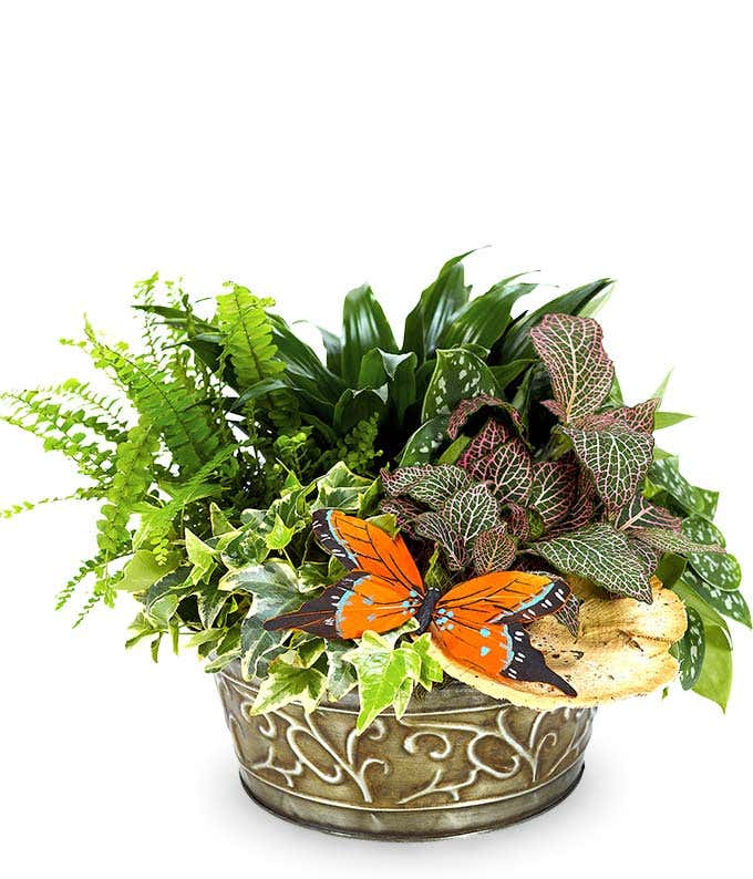 Butterfly Plant Dish Garden
