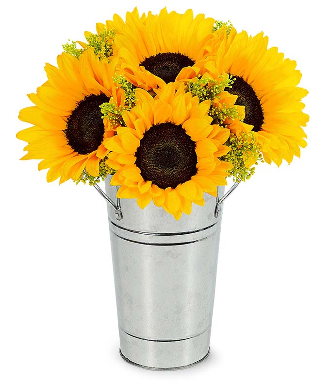 Sunflowers in a Galvanized Tin