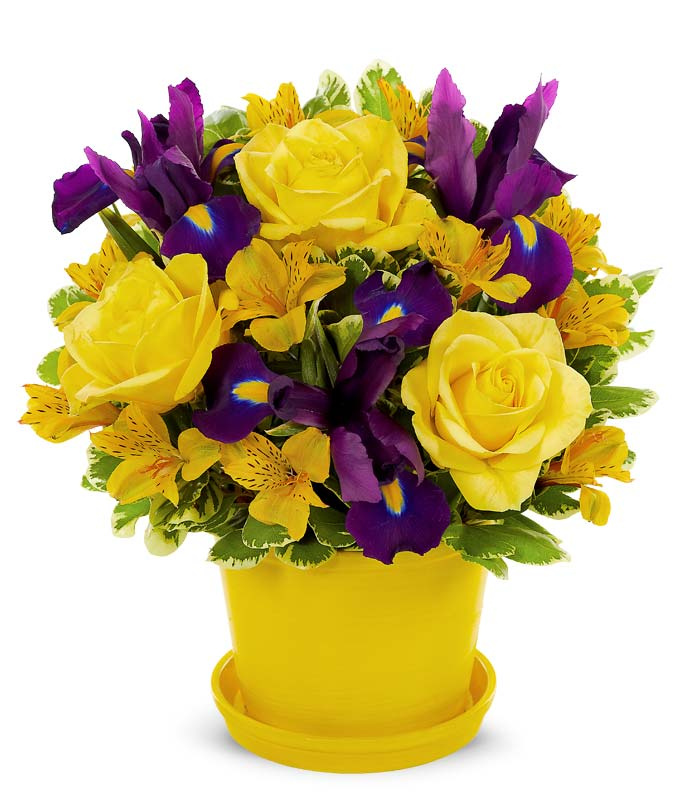 Yellow ross, blue iris and yellow alstroemeria