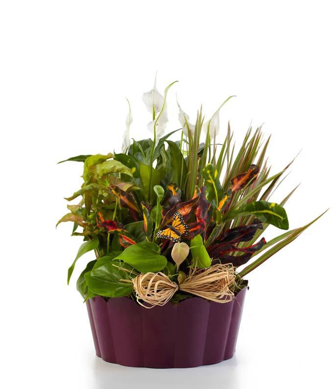 Plants-A-Plenty Dish Garden