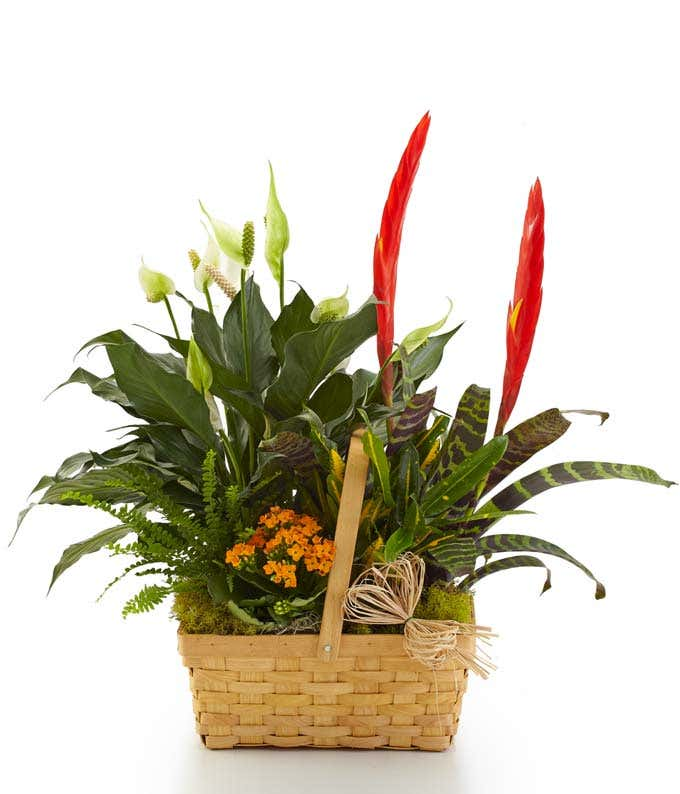 Blooming dish garden in a splitwood basket