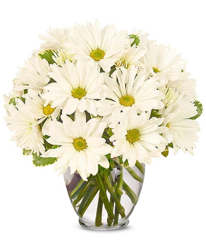 White Daisy Bouquet