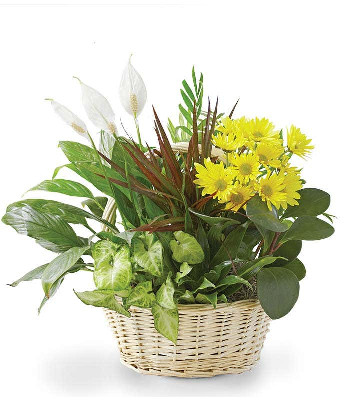Flower and plant dish garden