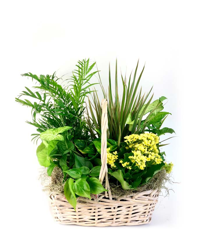 Send Plants Plant Delivery FromYouFlowers