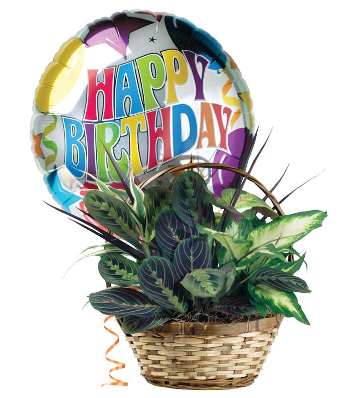 Dish garden plant delivered with birthday balloon