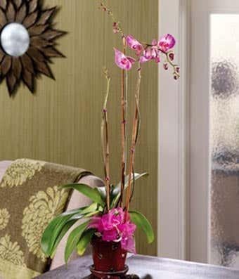 Tall purple orchid