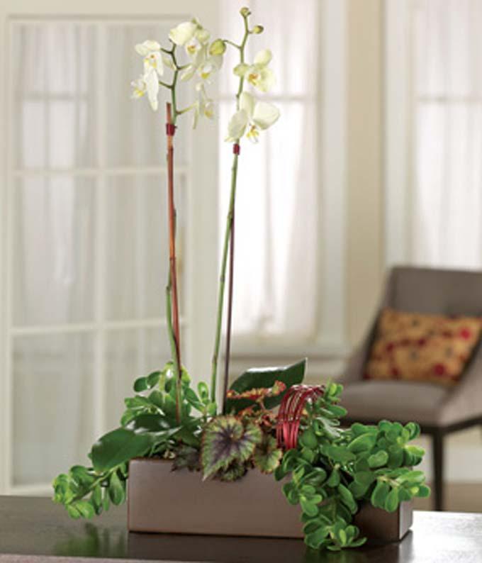 Orchid Garden Bouquet