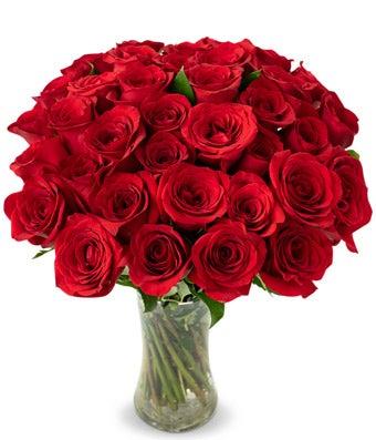 36 Ravishing Long Stemmed Red Roses