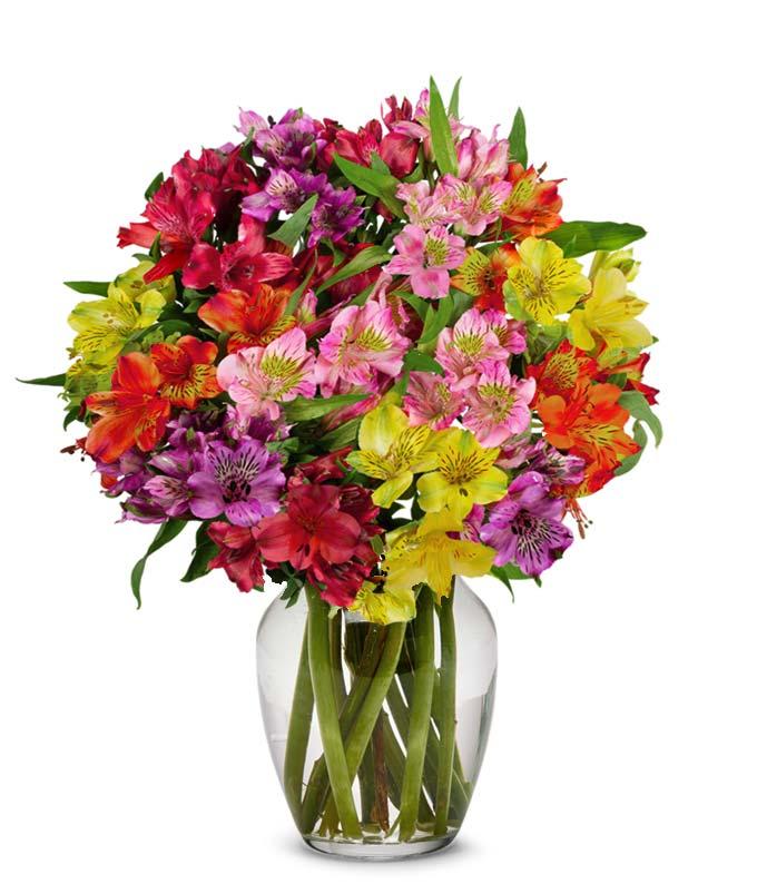 Rainbow Alstroemeria Bouquet 15 Stems