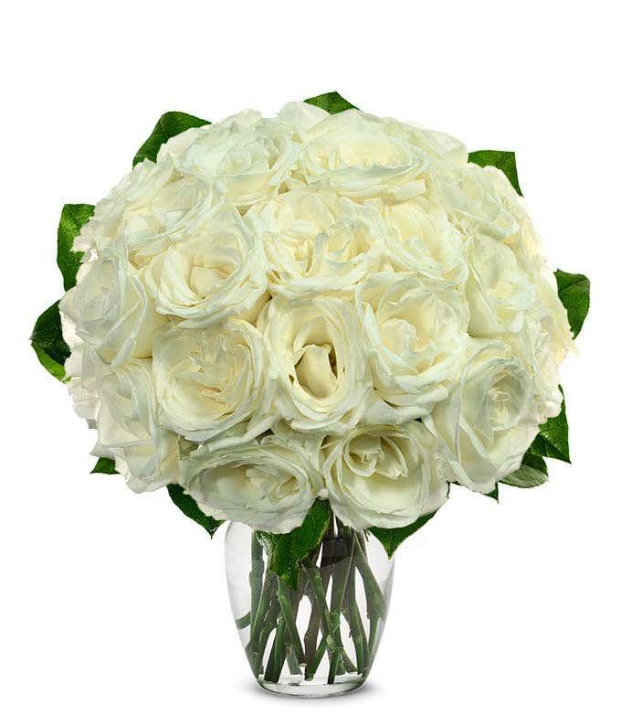 Two dozen white roses