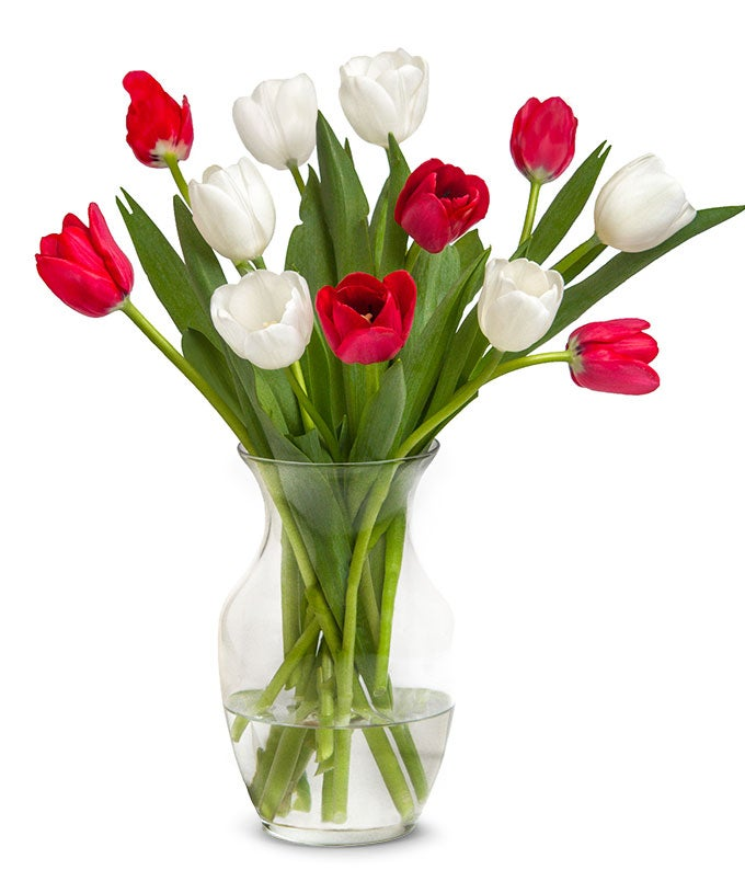 Christmas tulips for delivery in a red vase.