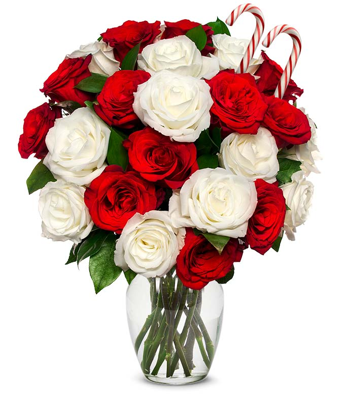 Two dozen Holiday red and white roses