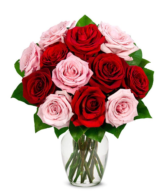 One Dozen Red and Pink Roses