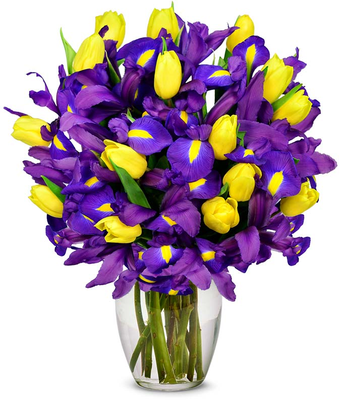 Yellow tulips delivered with blue irises