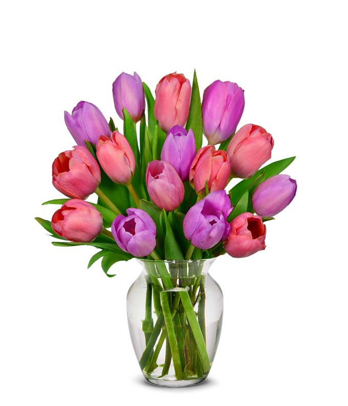 Pink tulips and purple tulips for flower delivery