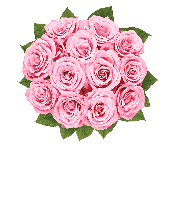 One Dozen Light Pink Breast Cancer Awareness Roses