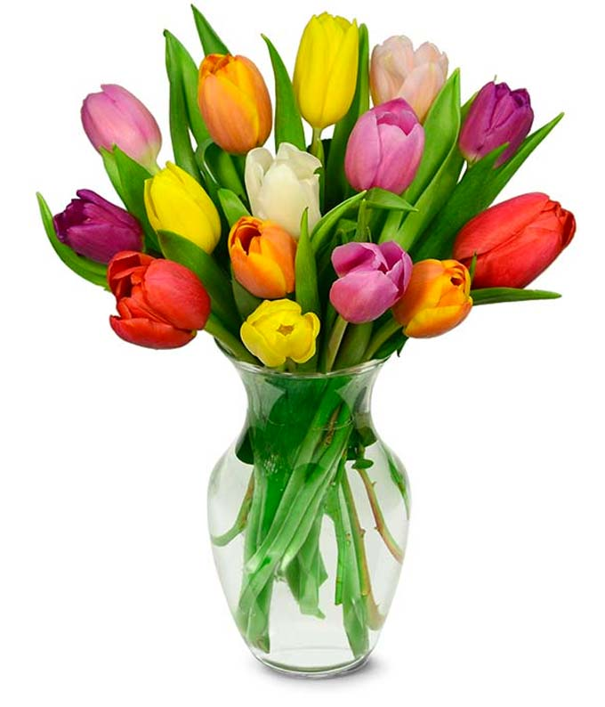15 Stem Rainbow Tulips