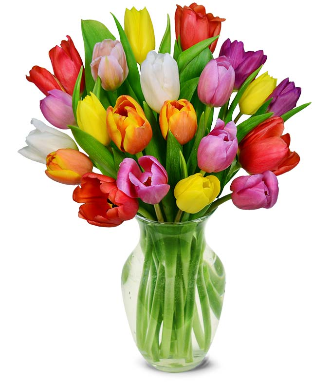 20 Stem Rainbow Tulips