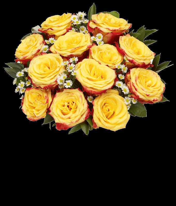 Bi-color two dozen roses