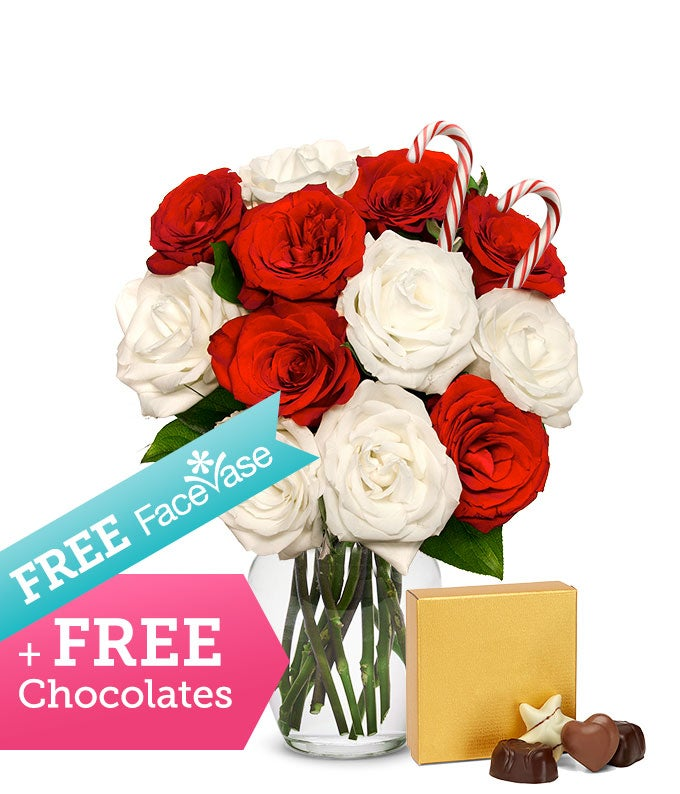 One Dozen Candy Cane Roses with Free FaceVase & Chocolate