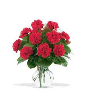 one dozen red carnations at from you flowers