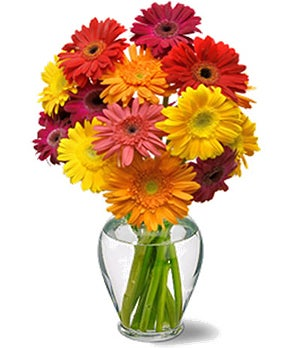 Mixed Gerbera Daisy Bouquet
