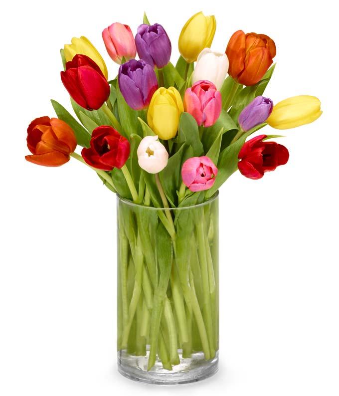 Tulip Rainbow