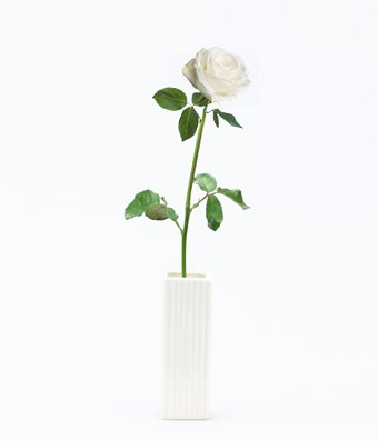 Single White Rose Delivered At From You Flowers