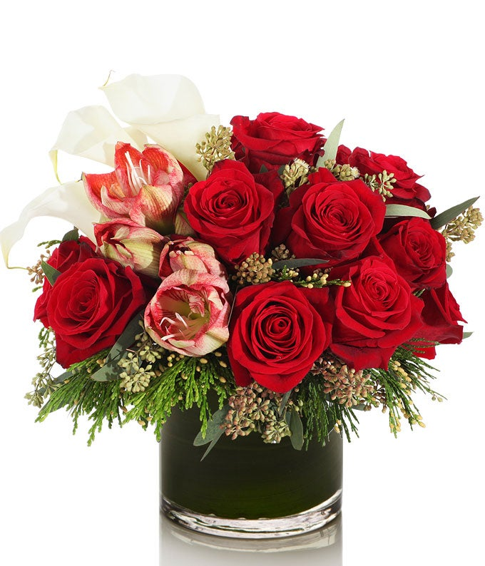 Bi-Color red and white flowers for Christmas