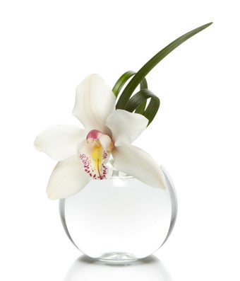 Cymbidium Bud Vase Bundle