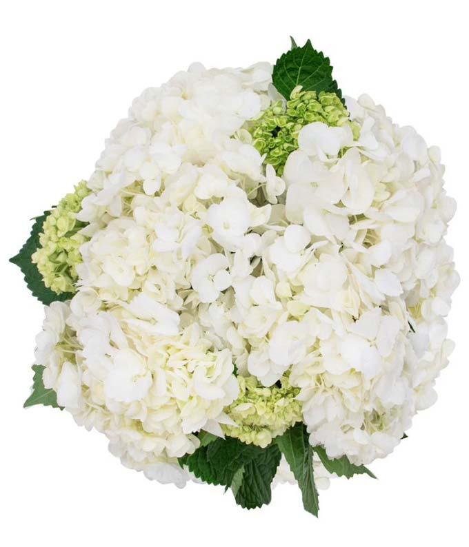 White & Mini Green Hydrangea Bouquet