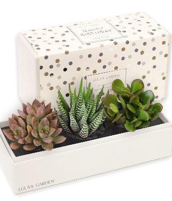 Happy Birthday Trio Succulent Gift Box