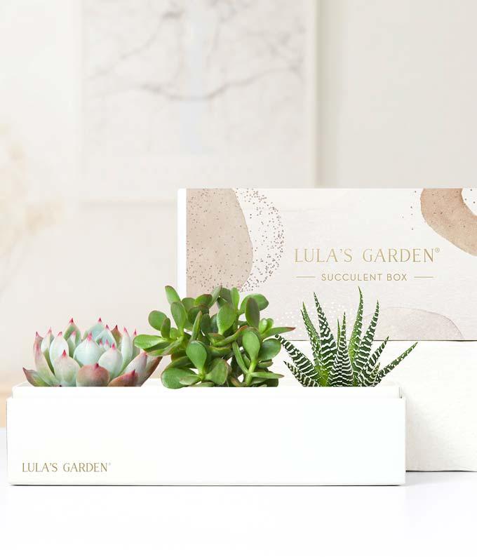 Thank You Succulent Trio Gift Box