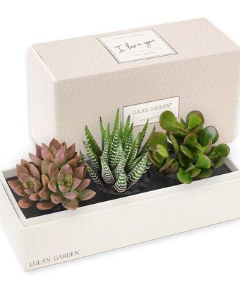 """I Love You"" Succulent Trio Gift Box"