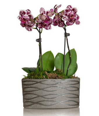 Mini Multi-Colored Orchid Planter