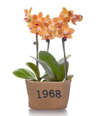 Rustic Mini Orchid Planter