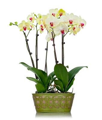 Pink orchids in a burlap pot
