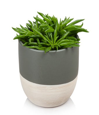 Green and Grand Succulent Plant