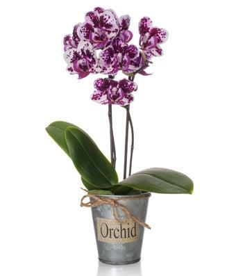 Purple Hues Orchid Arrangement
