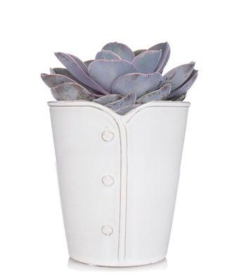 Echeveria Pearl Succulent in white pot