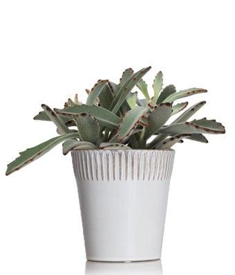 Wild & Free Succulent