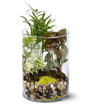 Garden in glass mini garden send a plant - Ikea plantes vertes ...