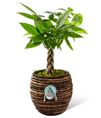 Zen plant delivered in a wicker basket