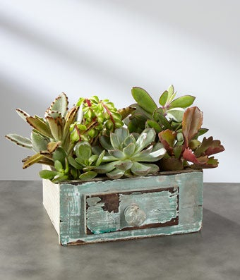 Picture Perfect Succulent Windowbox